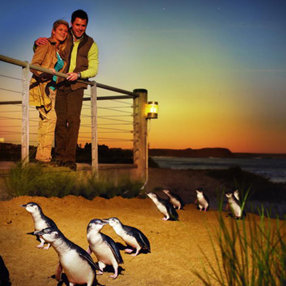 Phillip Island Australia: Great Ocean Road And Phillip Island Tour