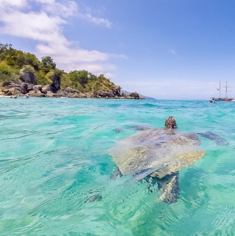 whitsundays australia tour turtle