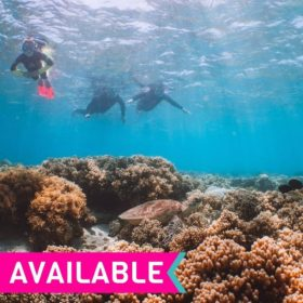 Down Under Cruise and Dive Evolution Great Barrier Reef Day Trip