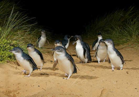 Phillip Island Tours