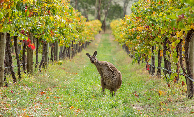 winery tour australia