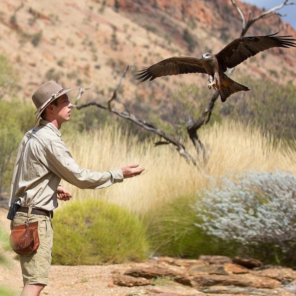 desert park alice springs tours