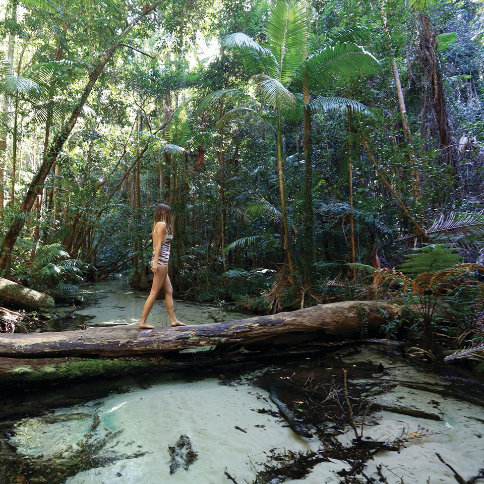 fraser island tours rainforest