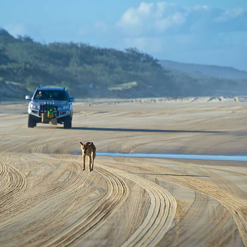 Fraser Island Australia: Make The Most Of Fraser Island