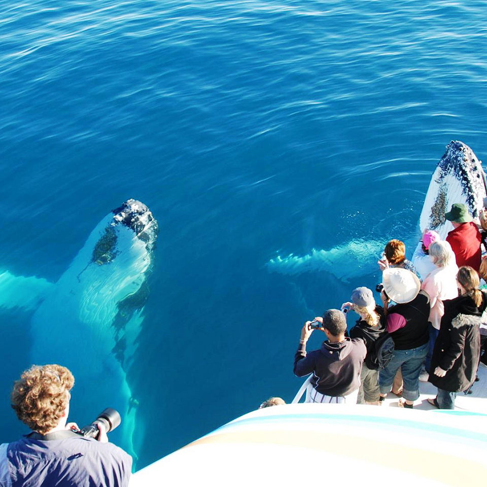 fraser island tour whale watching