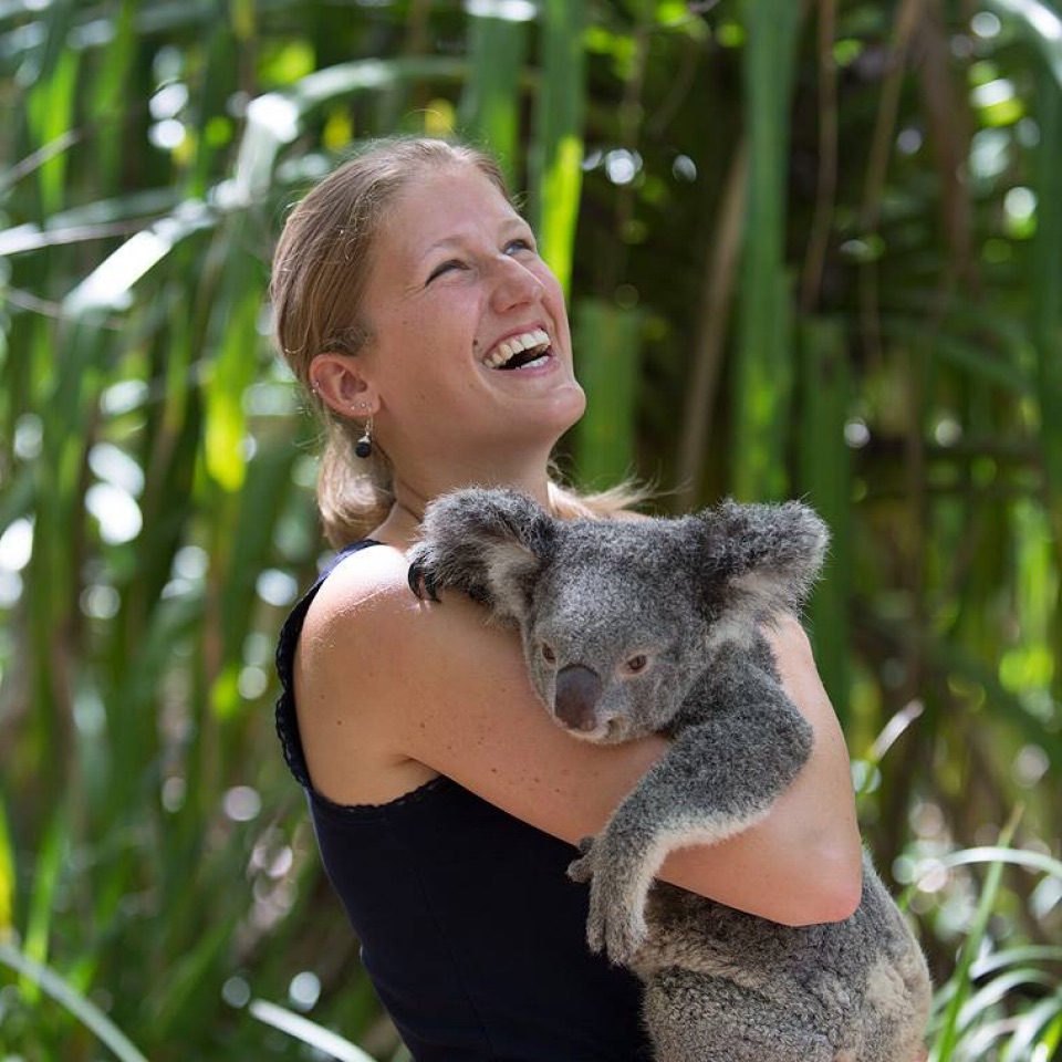koala cuddle bungalow bay