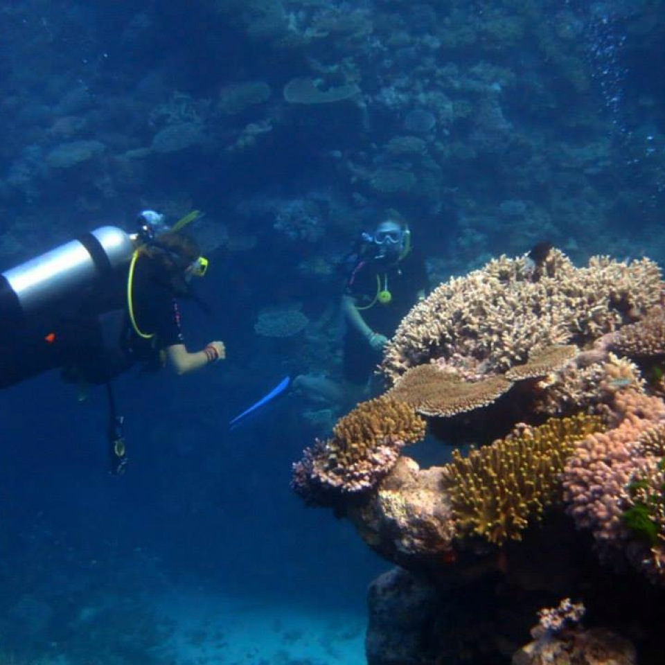 Pro dive cairns open water dive course 5 days - Best place to dive the great barrier reef ...