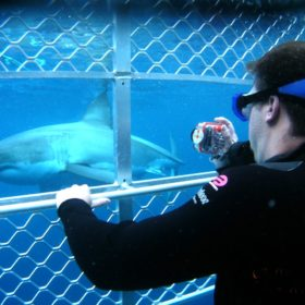 Port Lincoln Great White Shark Cage Diving