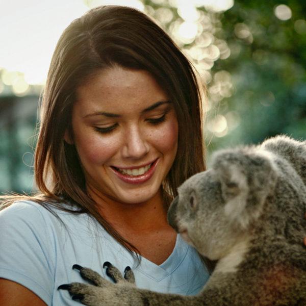 Australia Koala Cuddle