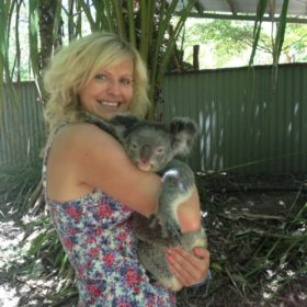 Bungalow Bay Koala Cuddle