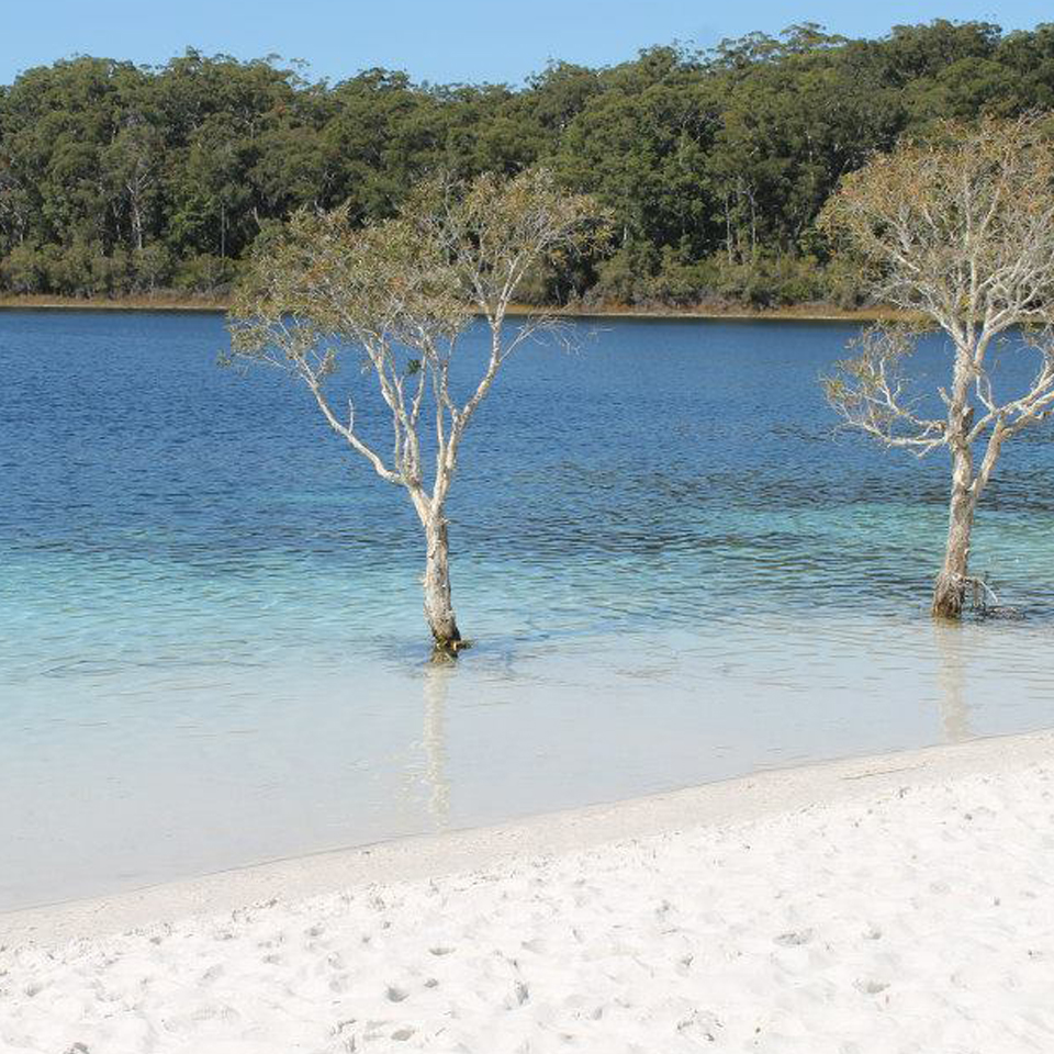 Fraser Island: Choosing The Best Fraser Island Tour