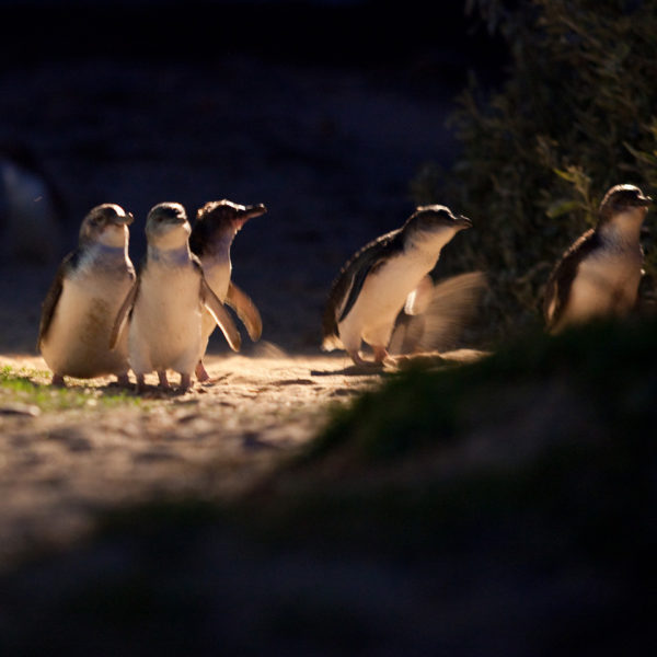Phillip Island Express Trip