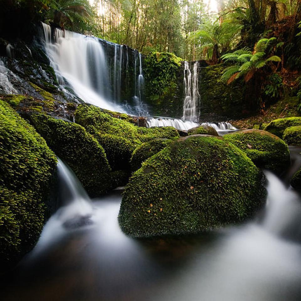 Mount Field Tasmania