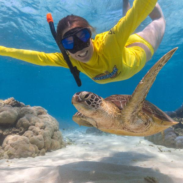 Ocean Safari turtles