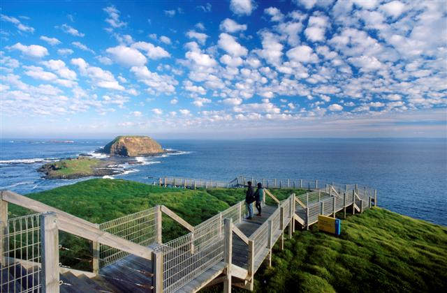Phillip Island Small Group Tour
