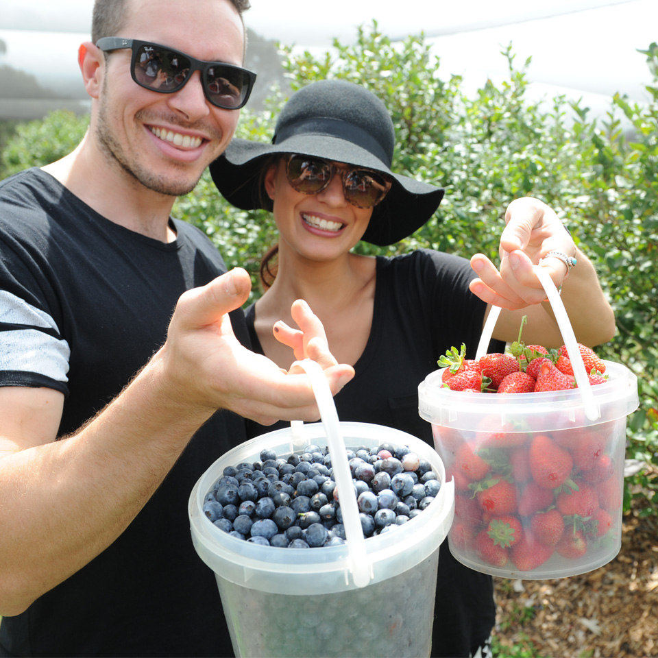 Picking Strawberries and Blueberries