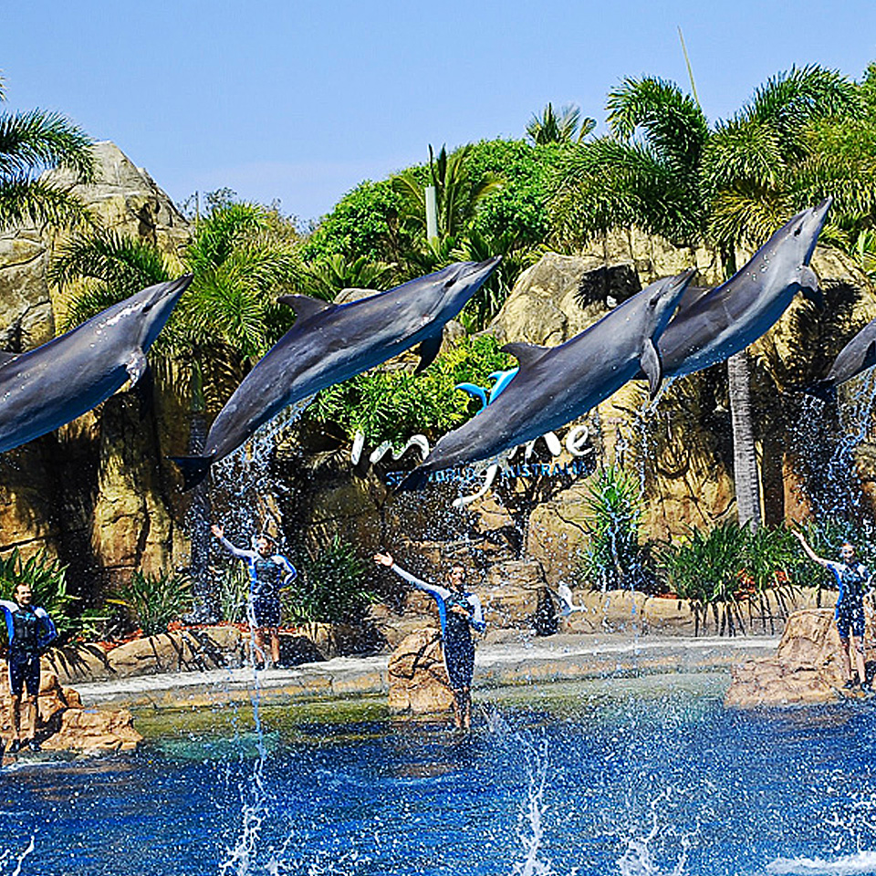 Movie world wet n wild and sea world 7 day mega pass sea world gold coast gumiabroncs Image collections
