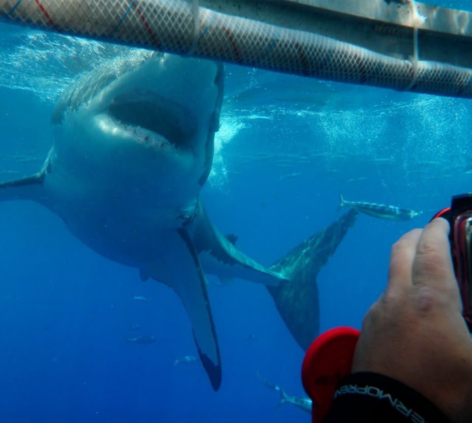 Filming in a Shark Cage