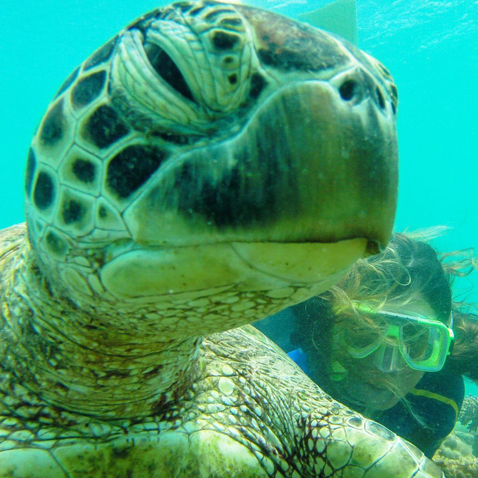 Whitsundays Turtle