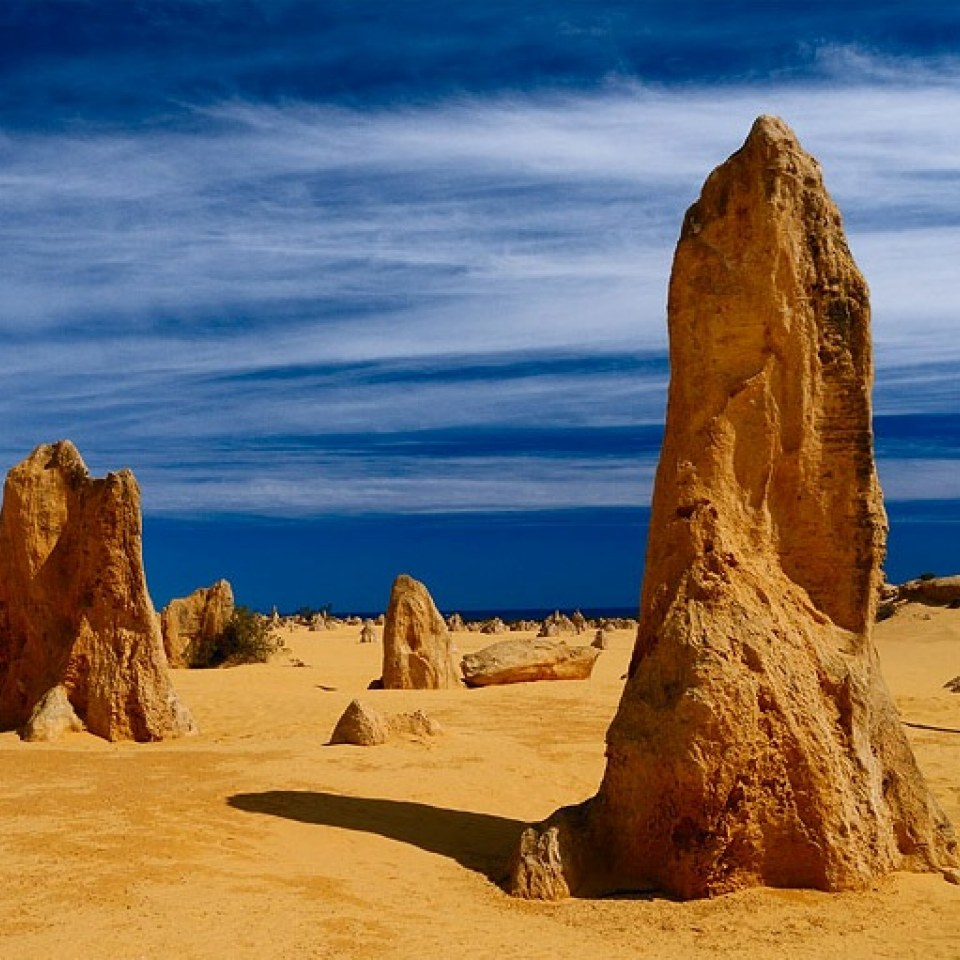 Western Australian Native Plants: 1 Day Pinnacles Tour From Perth Western Australia