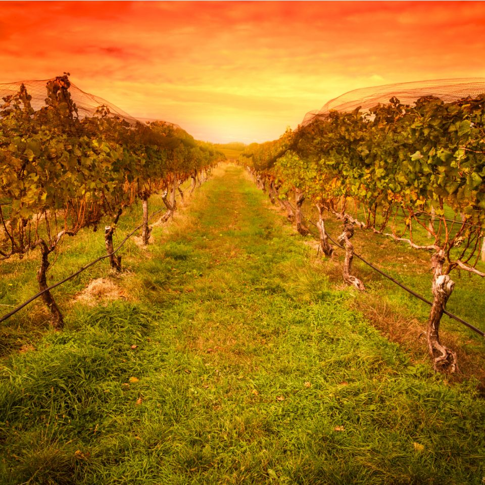 Hunter Valley Wine Tour from Sydney - One Stop Adventures