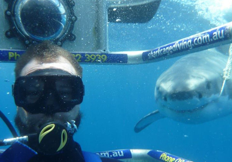 Bruce the Great White Cage Diving