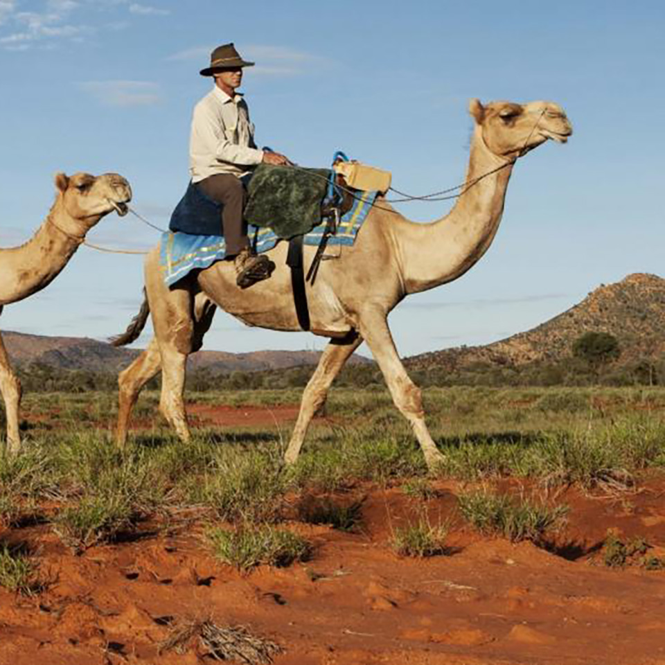 alice springs tour camel