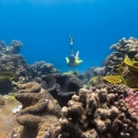 Half-day Great Barrier Reef Tour - coral