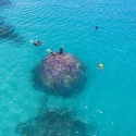 Half-day Great Barrier Reef Tour - snorkelling