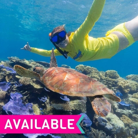 Half-day Great Barrier Reef tour - turtle