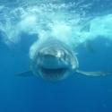 Shark Smiling!