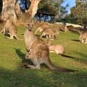 bonorgon Tasmania