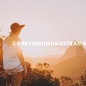 Mount Ngungun Greyhound