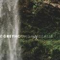 Greyhound Springbrook National Park