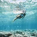 Greyhound Great Barrier Reef