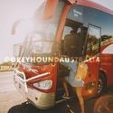 Greyhound-Australia_Whimit