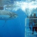 Perth to Adelaide Tour - Shark Diving Eyre Peninsula