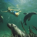 Perth to adelaide tour - swimming with sea lions