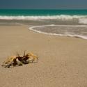 Beaches West Coast Australia