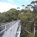Tree Top Walk South west Australia