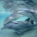 South Australia Tours Dolphins
