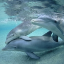 South Australia Tours Dolphins