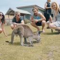 Phillip Island Melbourne Arrival Package 8 Day Kangaroo Group Shot
