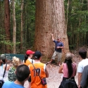 Satinae Tree Tour Group