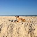 dingo fraser island tour