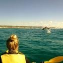 Double Island Point Dolphin Kayak
