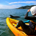 Byron Bay Kayak with Dolphins