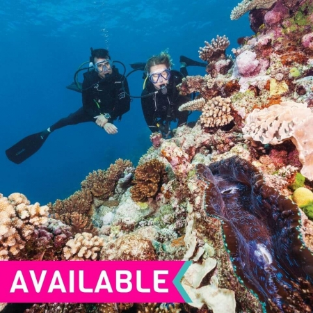 Great barrier reef snorkelling diving tour