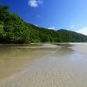 Cape Trib Rainforest on Beach