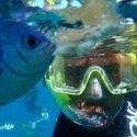 Snorkel with the friendly fish